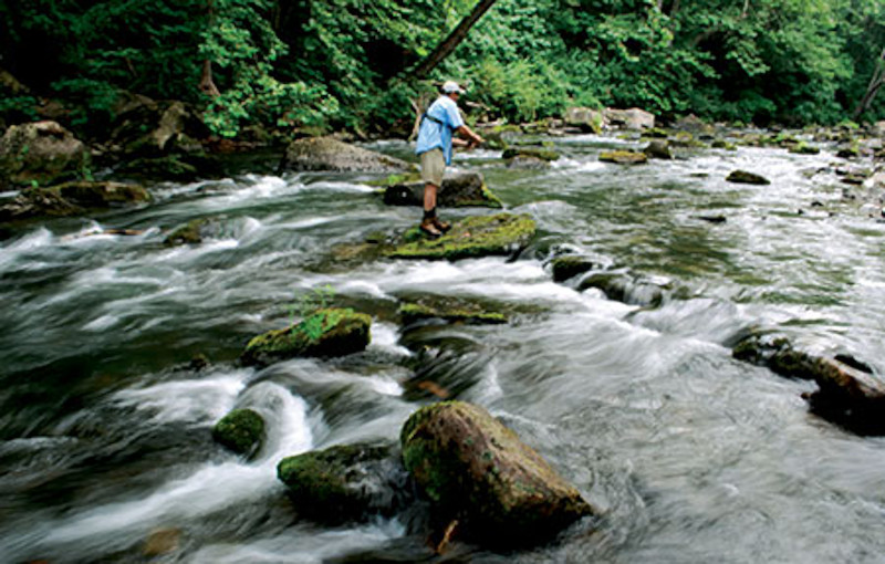 West virginia outdoor activities west virginia fly fishing for Elk river wv trout fishing